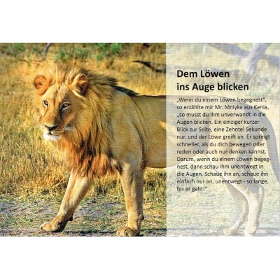 Dem Löwen ins Auge blicken - Geschichtenkarte